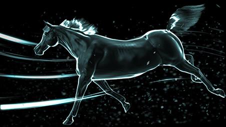 paard 452x255.jpg